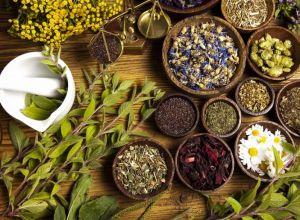 Травяные растения поддерживающие иммунную систему