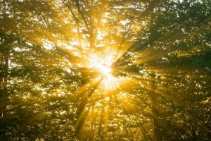 Влияние солнечного света