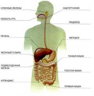 здоровый кишечник питание