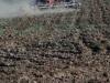 Выращивание трав в палисадниках и на приусадебных участках.