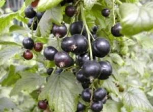 Растительные источники фолиевой кислоты