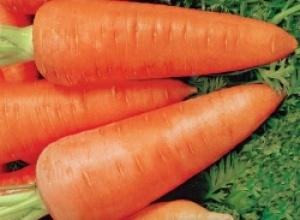 Морковь незаменимый источник витаминов для глаз