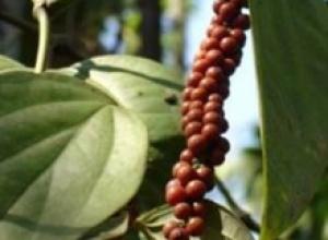 Перец черный (Piper nigrum), Розмарин лекарственный (Rosmarinus officinalis), Тимьян ползучий (Thymus serpyllum)
